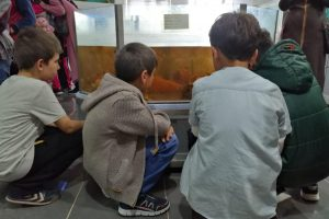 Kastamonu'nun Taşköprü İlçesi'nden Küçük Misafirler