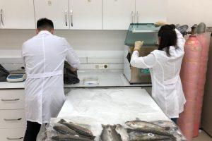 Fakültemiz Araştırma ve Uygulama Merkezinde Yetiştirilen ve Porsiyonluk Boya Gelen Gökkuşağı Alabalıkları Satışa Hazır